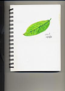 Leaf 12 30 13