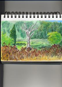 Willfest sketch